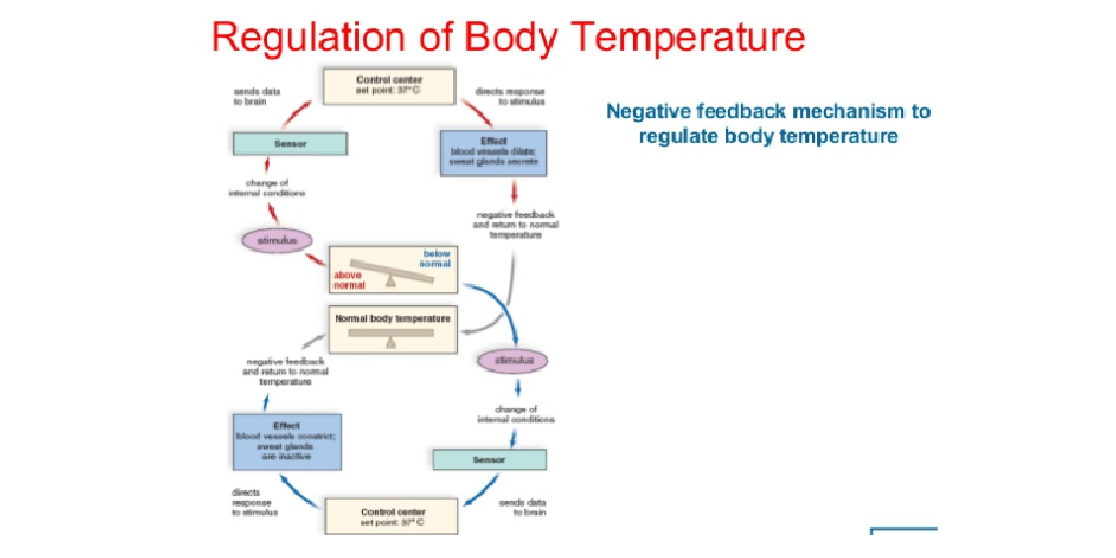 Regulation of body temperature by christopher kirk infogram ccuart Choice Image