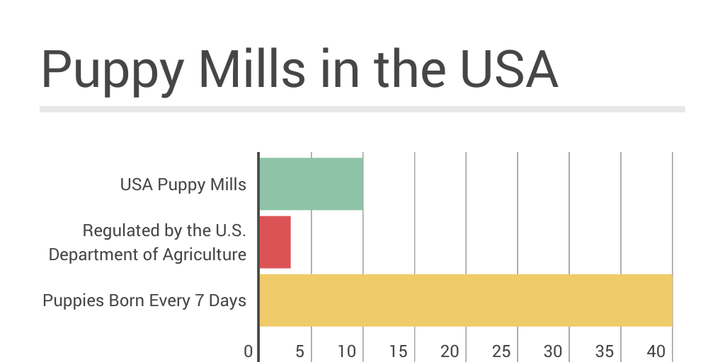 Puppy Mill Stats by charlyn corum - Infogram
